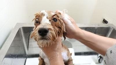 シャワーはチョット苦手なんだー