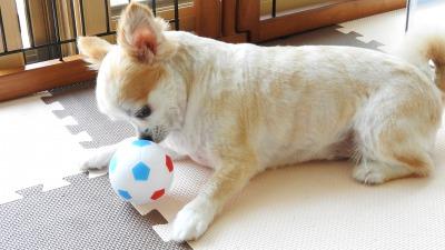 私のボール、取っちゃイヤよ