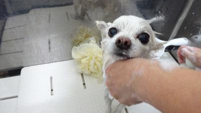 キレイに洗って下さいね♪