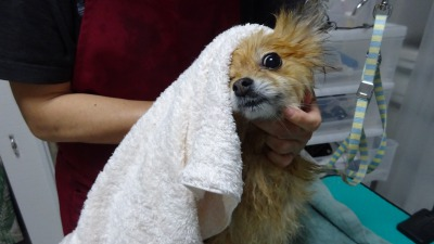 うわぁ、はやく乾かしてよぉー!