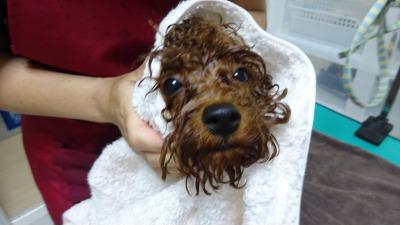 あっ、乾かしてくれるんですか?