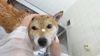 お顔は濡れても大丈夫だよー♪