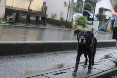 雨はニオイが消えちゃうから嫌なんだよなぁ…